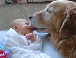 bebes-mascotas-animales-infantes-niños-alergias