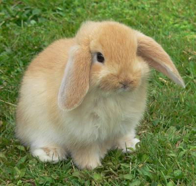 curiosidades de conejos