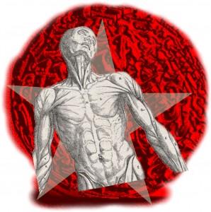 curiosidades-del-organismo-298x300