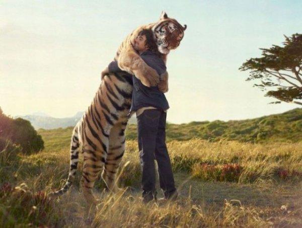 Un tigre dando un abrazo