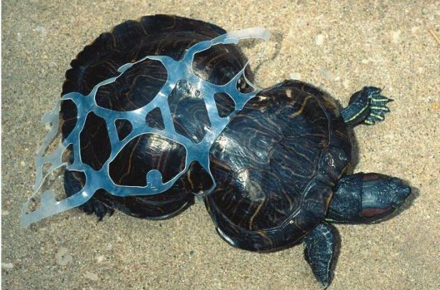 tortuga-caparazon-plastico