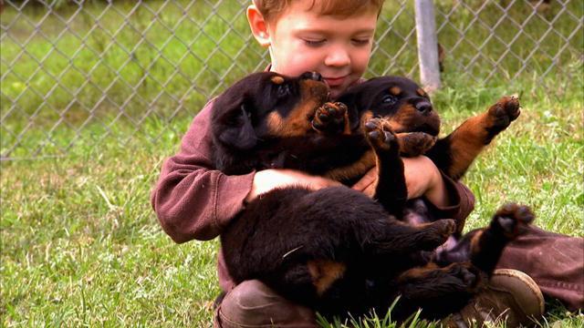 por que los perros viven menos que las personas