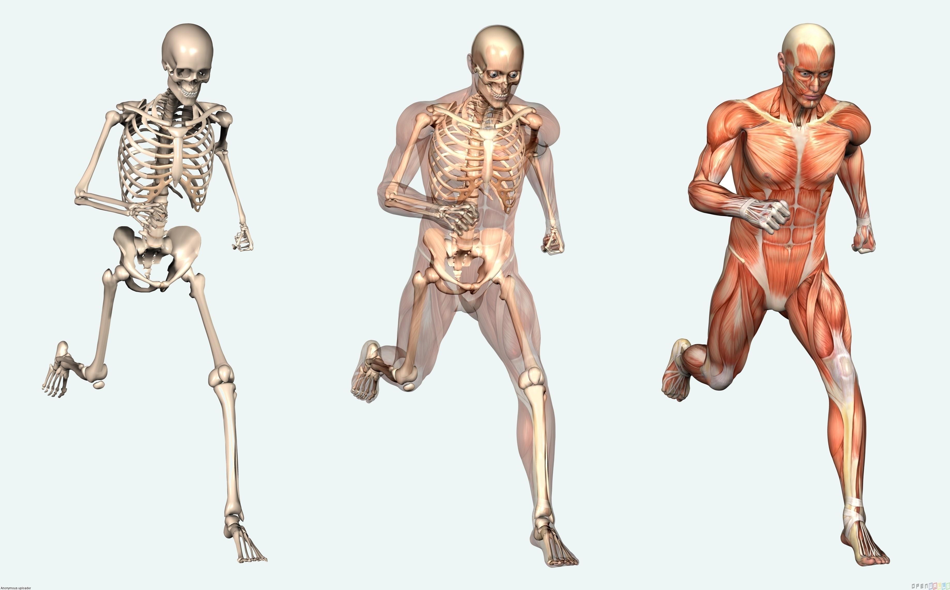 5 partes del cuerpo humano que no sirven para nada