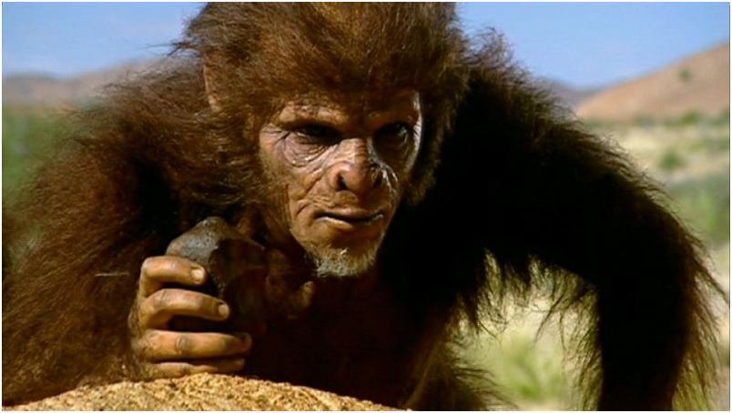 por que los monos no siguen evolucionando