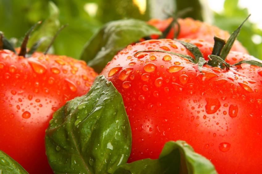 el tomate es una fruta o un vegetal