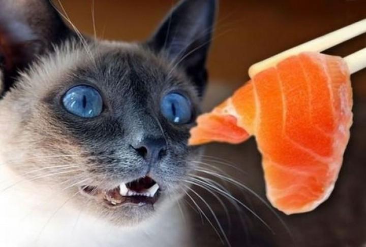 Por qué a los Gatos les gusta el pescado