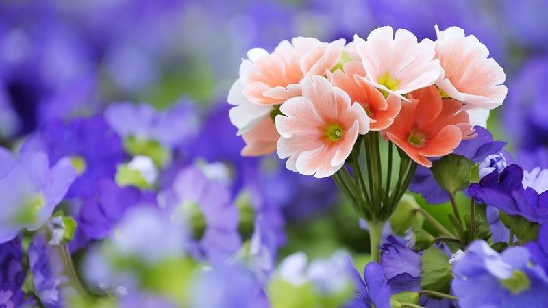Flores bonitas