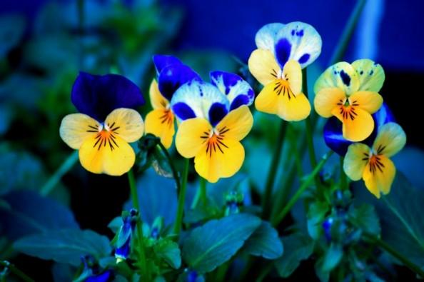 flores bonitas 2