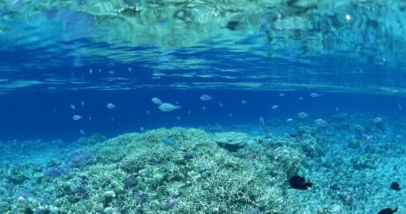 Agua del Mar Salada