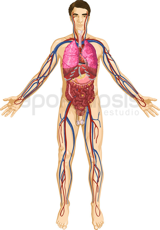 curiosidades cuerpo humano