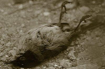 pájaro-muerto