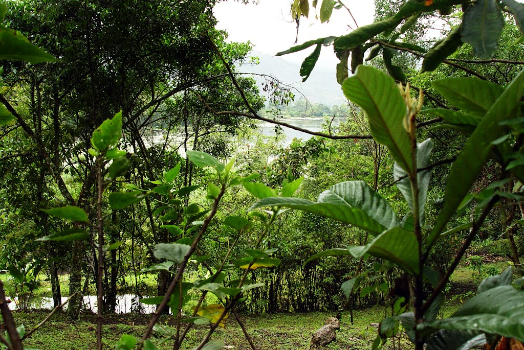 Qu pasar a si desaparecen todas las plantas de la tierra for Cuales son los arboles perennes